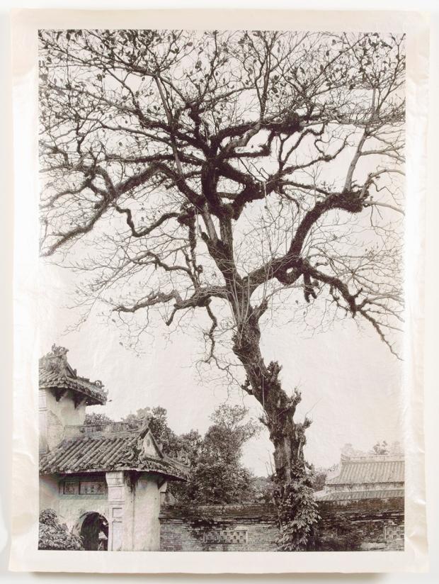 Meridel Rubenstein, Temple Tree, Vietnam, 2000-01, vegetable ink on paper, with mica and gum arabic