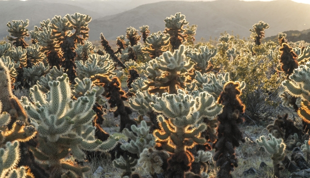 Joshua Tree National Park, photo by Sue Klein