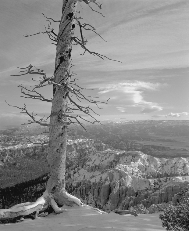 Bob Herbst, Bryce Point, Snowy October Morning, 1994, platinum/palladium print, 16 x 12 in., courtesy of the artist